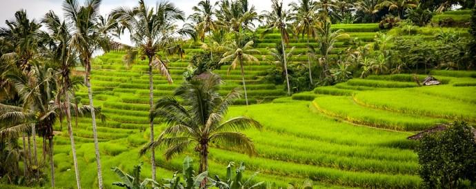 Indonēzija | Bali